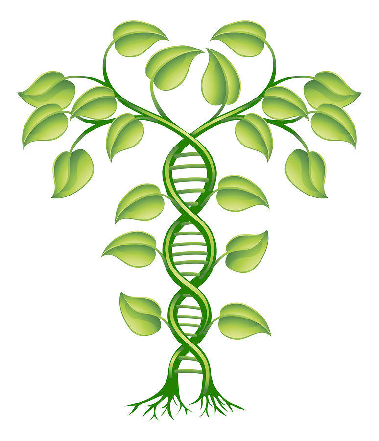 bigstock-Dna-Plant-Concept-23728133.jpg